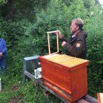 """Themenabend """"Bienengesundheit: Bienen sicher und natürlich behandeln"""""""